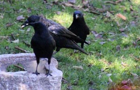 پرنده ها برای این دختر غذا هدیه می آورند + عکس