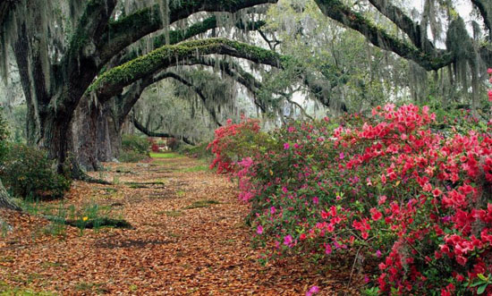 زیباترین درخت هایی که تا به حال دیده اید + عکس