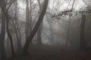 آشنایی با جنگل جیغ واقع در انگلستان