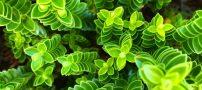 معرفی 8 گیاه که باعث کاهش دما در آپارتمان میشود