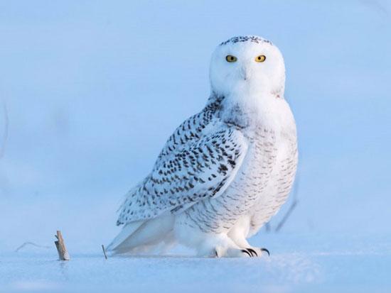 نکات جالب درباره حیوانات قطب شمال که باید بدانید