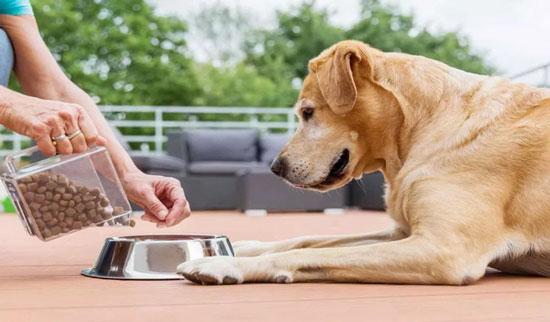 چه استخوانی برای سگ خطر دارد؟نحوه غذا دادن به سگ