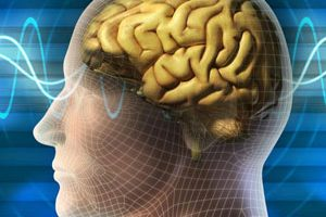 3 حقیقت جالب درباره مغز شگفت انگیز انسان که باید بدانید