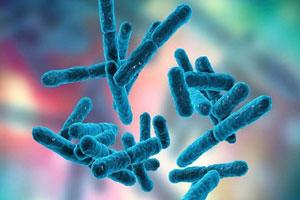 همه چیز درباره پری بیوتیک و فواید مصرف آن