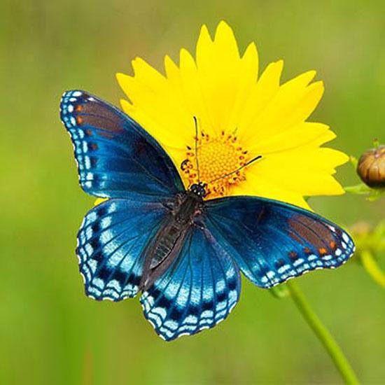 آیا میدانید پروانه نشانه و نماد چیست؟