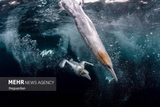 عکس های دیدنی و برتر جانداران کف اقیانوس ها 2021
