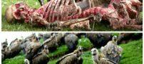 عجیب ترین عقاید و رسومات مردم تبت