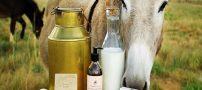 شیر الاغ | آشنایی با خواص جادویی و معجزه گر شیر الاغ