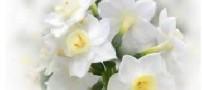 گل های ماه های تولد