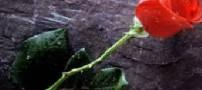 شعر زیبای تا گل هیچ
