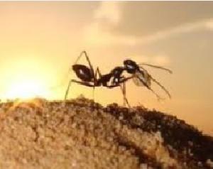 استفاده روغن مورچه برای نوزادان خوب است یا نه؟