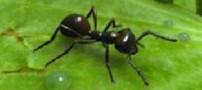 درمان موی زائد با روغن مورچه ممکن نیست