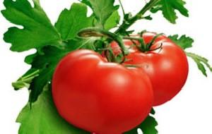 دانستنی های جالب گوجه فرنگی