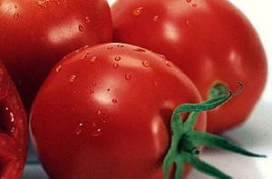 نکته خواندنی راجع به گوجه فرنگی!!