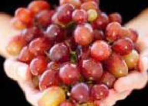 انگور با سرطان کولون مقابله میکند