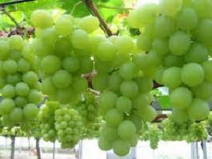 انگور کلسترول بد خون را کاهش میدهد