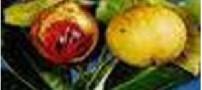 پیش دهد میوه بر آرد بهار