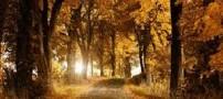 راز یک برگ پاییزی در چیست؟