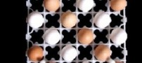کارتن تخممرغ برای تفکیک