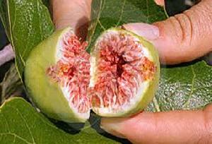 خواص میوه انجیر و منابع مهمش