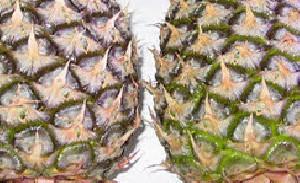 خواص آناناس و آشنایی با آن
