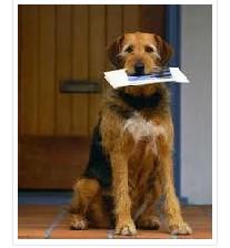 سگ باهوش و داستان زیبایش