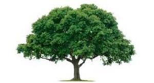 داستان پندآموز درخت جاودانگی