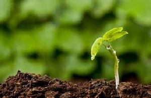 آرزوی دانه کوچک چیست؟ (داستان)
