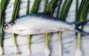 ماهی مزاج سرد و تری دارد
