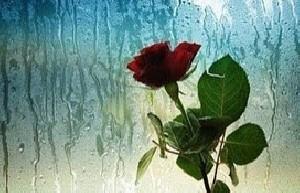 شعرهای عاشقانه هوشنگ ابتهاج
