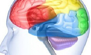 رشته های عصبی در مغز، نخاع