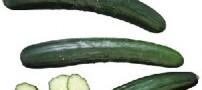خاصیت مصرف خیار در چربی سوزی