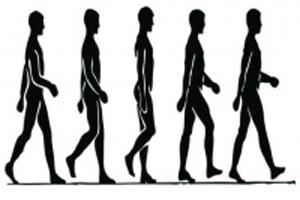 چرا در حال راه رفتن دست ها نیز حرکت می کنند؟