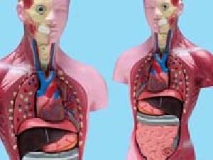 5 چیز عجیب و غریب که در بدن انسان وجود دارد!