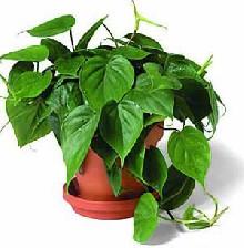 نکاتی درباره انتخاب مناسب در گل و گیاه