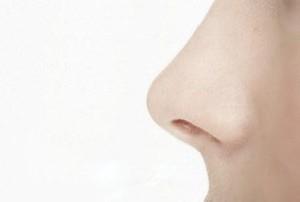 بینی بزرگ بهتر است یا بینی کوچک؟