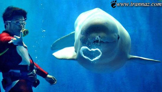 عکس های زیبا از شگفت انگیزترین اشکال قلبی در دنیا