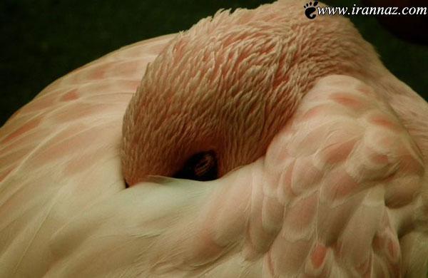 زیبا و خارق العاده ترین عکسهای طبیعت در سال 2013
