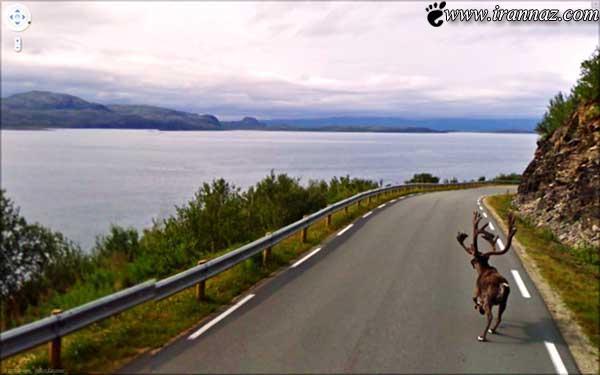 شکار بسیار جالب و دیدنی چند تصویر توسط گوگل