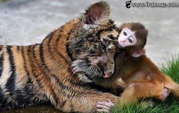 عکسهای خنده دار و متفاوت از رفتارهای عجیب حیوانات