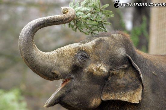 این سه حیوان از زمان دقیق مرگ خود خبر دارند (عکس)