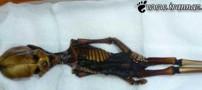 کشف باورنکردنی اسکلت 15 سانتی انسان (عکس)