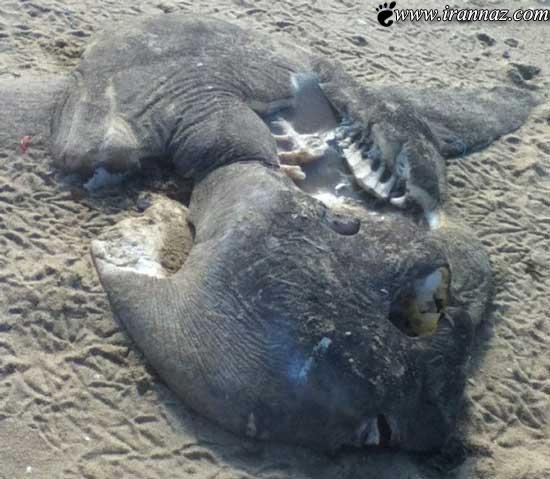 عکس های ترسناک از موجوداتی که آب به ساحل آورده