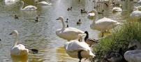 عکس های بسیار زیبا از بزرگترین باغ پرندگان در تهران