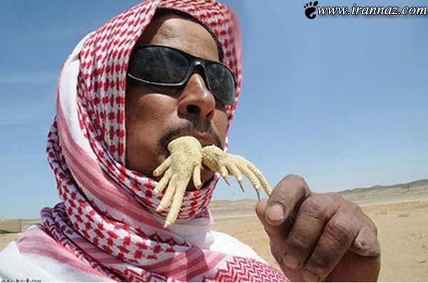 تصاویر چندش آور شکار و خوردن مارمولک در عربستان