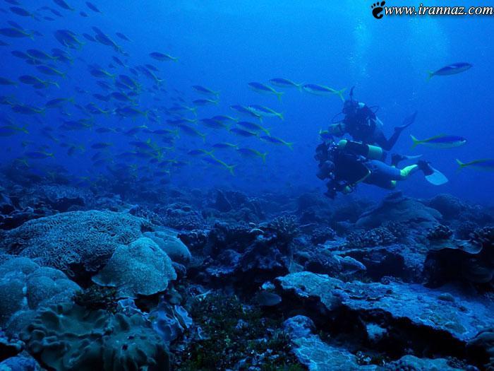 عکس هایی از اسرار دیدنی و شگفت انگیز اعماق دریاها