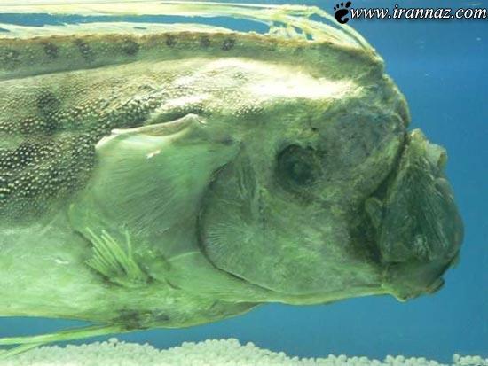 کشف یک موجود ناشناخته دریایی در انگلیس! (+تصاویر)