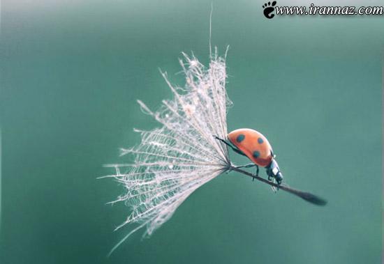 عکسهای جالب از شکار لحظه های دیدنی با کیفیت بالا