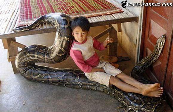 عکسهای عشق عجیب یک مار 4 متری به یک پسر بچه!