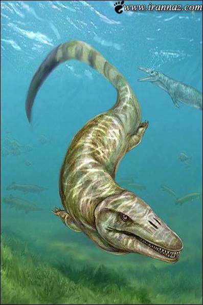 کشف عجیب یک هیولای دریایی در مجارستان (عکس)